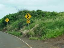 hawai0332