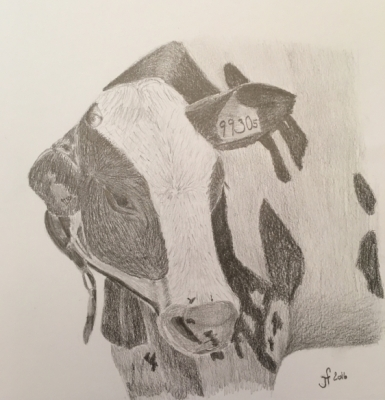Die Kuh vom Horben